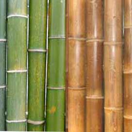 Va edelstahl bambuszaun - Trennwand bambus ...