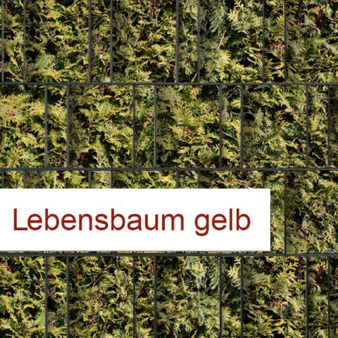 Sichtschutzstreifen Motiv Lebensbaum gelb