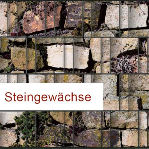 Sichtschutzstreifen Motiv Steingewächse
