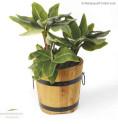 Holzfass Pflanzkübel aus Robinienholz Anwendung