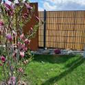 Bambus als Gartensichtschutz