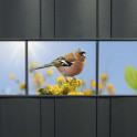 PVC Zaunblendenstreifen Motiv Bird Life