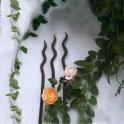 Gartenrosenstab Gardenfire