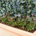 Dekorative Unterpflanzung