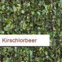 Polyester Sichtschutzstreifen Motiv Kirschlorbeer