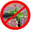 Unkrautschutz für Ihren Garten