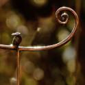 Meisenknödelhalter mit Vogel - Detail