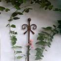 Gartenrosenstiel Rostpatina