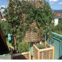 Robinienzaun Baldo Stabil auch für den Balkon