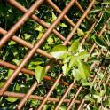 Spalier aus Weide mit Kletterpflanzen als Sichtschutz