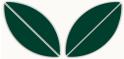 PVC Design Streifen Motiv Blatt-weiß - moosgrün-9er Pack